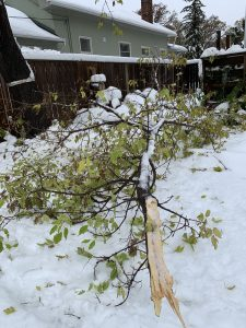 Downed tree branch